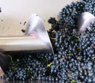 vinificazione in bianco di uve nere